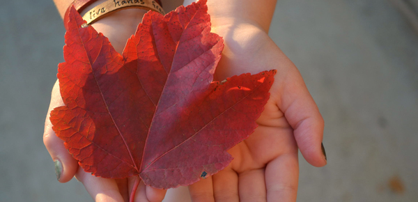red-leaf-2
